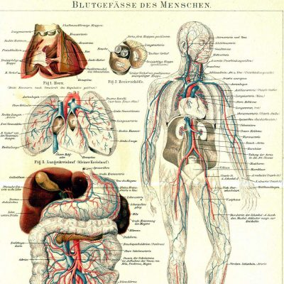 Aircampus Graz Medizin Anatomie Karte