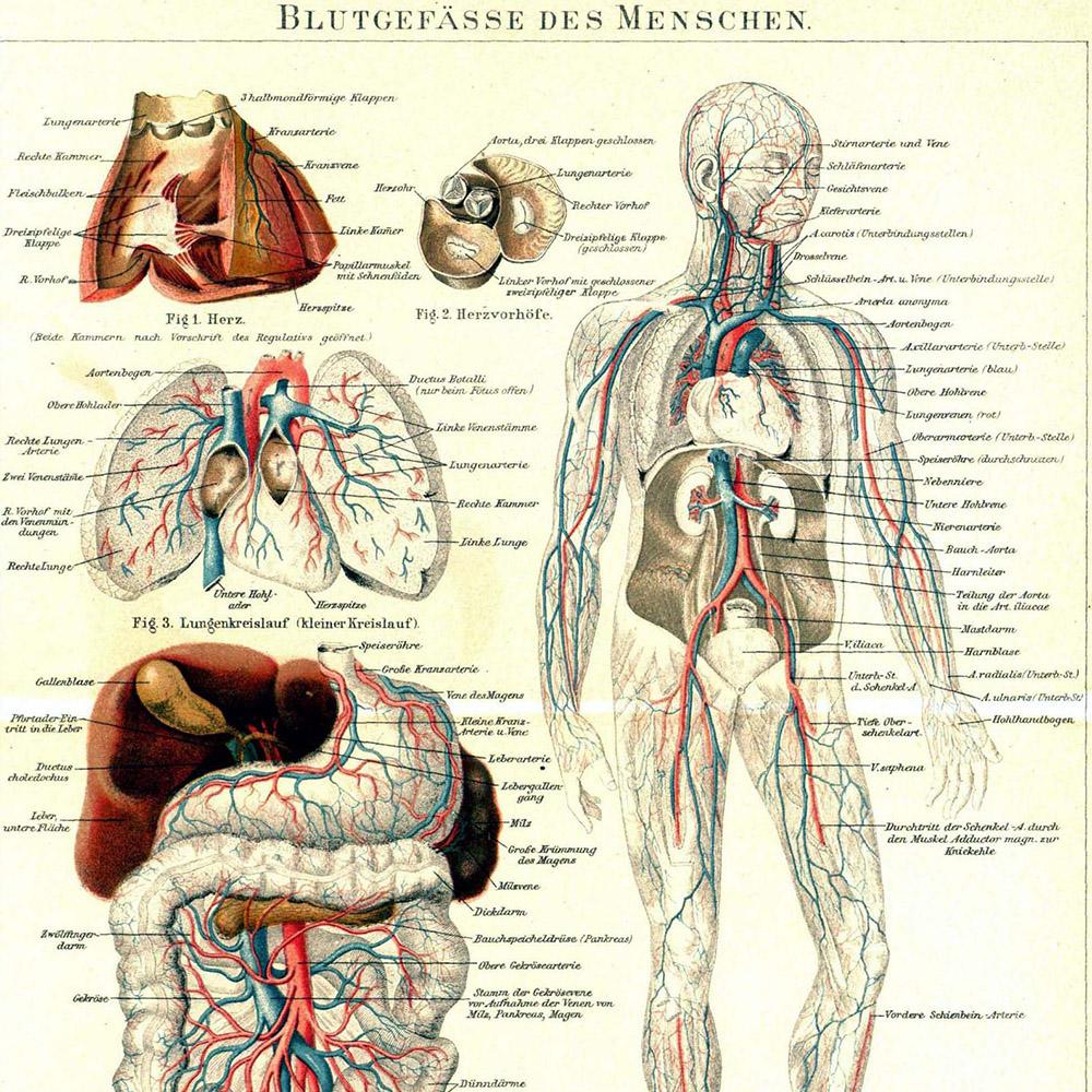 Erfreut Karte Des Körpers Organe Bilder - Anatomie Von Menschlichen ...